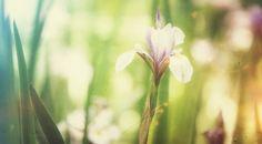 Mad for a Purple Wild Flower #WildFlower