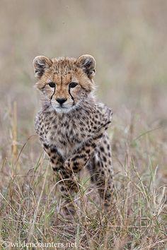 Wild Encounters: Paul & Paveena Mckenzie
