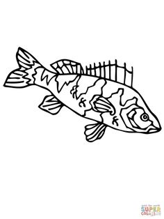 Yellow Perch Coloring Page Free Printable Pages