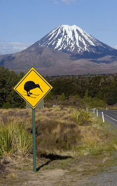 """New Zealand Scene. A road sign near National Park, (on the way to Mt Ruapehu - Central North Island ski-area) for many years has had the skis graffitied onto the Kiwi symbol. There are Kiwis in the forest, so the sign is real! No one seems to mind this piece of graffiti... It's cute and """"fitting"""" Bill ✔️ (Image, curation & caption: @BillGP)."""