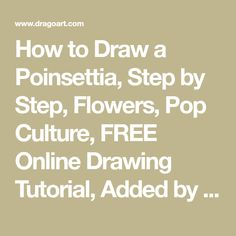 How to Draw a Poinsettia, Step by Step, Flowers, Pop Culture, FREE Online Drawing Tutorial, Added by Dawn, September 20, 2010, 6:13:55 pm