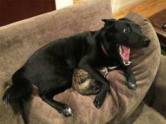 Doggo And Kitty Scared Of Thunder http://ift.tt/2q4lUmW
