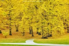 Autumn Pictures, You May, Instagram Accounts, Repeat, Golf Courses, Country Roads, Button, Website, Travel