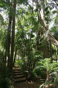 Tanglewood Gardens Rainforest Retreat | Mapleton, QLD | Accommodation