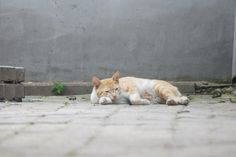 Sleep~Sleep~