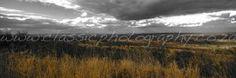 Grassland near Satara, Kruger Park