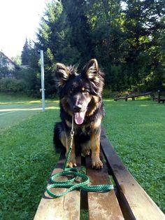 My Best Dog. Chodsky pes