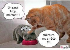 blague des chats blagues de chat , lolcats réalisé sur Wamiz