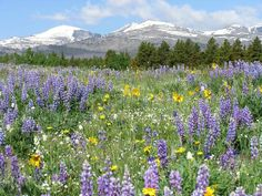 We love to go into the Bighorn mountains and have picnics, and trout fish.