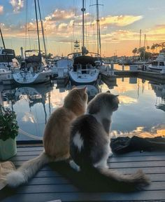Fluffy cats on a deck at sunset
