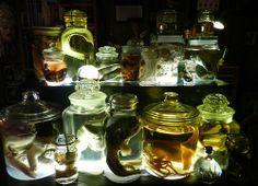 occult curio cabinet | Tim Prince #horror #specimens #bizarre #curio #oddities