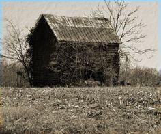 ~abandoned cabin (south of Port Royal, Virginia)~