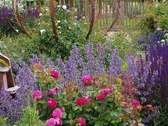 Es blüht herrlich im neuen Rosengarten - Bilder und Fotos