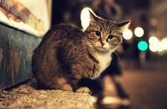 Street Cat. by inbrainstorm.deviantart.com on @deviantART