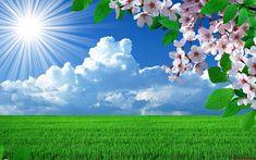 Naturaleza Primavera Flores paisajes Árboles Paisaje Sky Imágenes de fondo