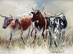 Nguni Study 2 Friesian, Cow Painting, Cattle, Pet Birds, Moose Art, African, Canvas Paintings, Canvas Art, Artwork