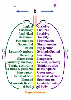 Left Brain / Right Brain   How we write:  The parts of the brain that are responsible for processing speech and language are highly specialized and located on the outside of the left side of the brain.    The parts of the brain that keep the heart beating are located deep inside the brain, where they are much better protected from the external world.