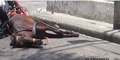 COLOMBIA! Do something about your Animals!! SIGn SHARE!! Ban cruel horse-drawn carriages in Cartagena, Colombia