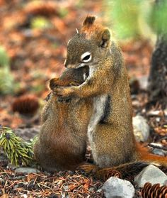 kiss, animals, animal pictures, heart, friends, mother, squirrels, nut, chipmunks