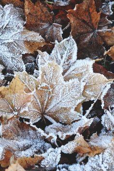 Листья в инее