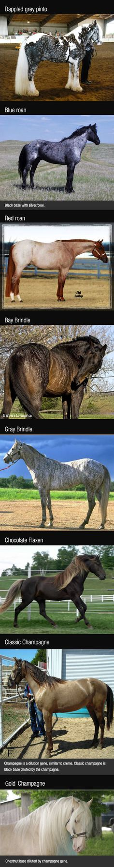 Breathtaking Horse Colors...I've never seen the top pinto coloring!