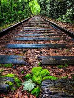 Trains, Teddy Bears and abandoned places Dslr Background Images, Photo Background Images, Picsart Background, Photo Backgrounds, Abandoned Train, Abandoned Places, Train Art, Old Trains, Train Pictures