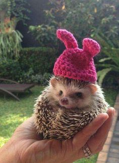 when you have a nice hat and someone mentions it and you feel nice Baby Animals Super Cute, Cute Little Animals, Cute Funny Animals, Baby Animals Pictures, Cute Animal Photos, Animals And Pets, Pictures Of Animals, Cute Pictures, Funny Hedgehog