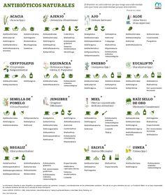 Antibióticos naturales #infografia #infographic #health