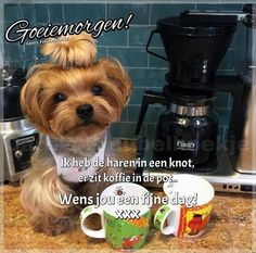 Good Morning Good Night, Good Morning Quotes, Weekend Fun, Yorkshire Terrier, Humor, Day, Choirs, Good Morning, Humour