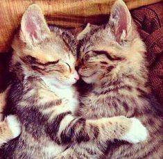 Chat photo amour image trop mignonne #chaton