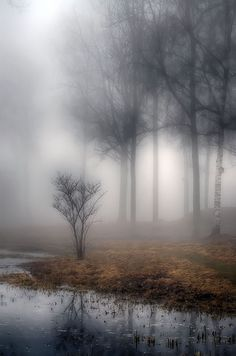 Foggy/misty water and trees Beautiful World, Beautiful Places, Landscape Photography, Nature Photography, Artistic Photography, Amazing Photography, Photography Tips, Amazing Nature, Belle Photo