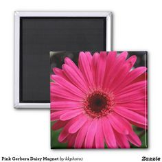Pink Gerbera Daisy Magnet