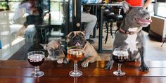 12 Best Dog Friendly Restaurants and Bars in Brevard