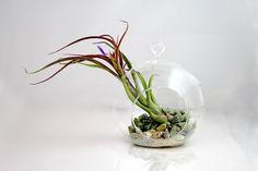 http://house.alysonhuber.com/wp-content/uploads/2014/11/Simple-Terrarium.jpg