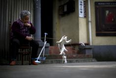 An old woman playing with a kitten near her house. Shanghai, China