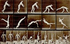 Action: detail from Eadweard Muybridge's 'Head-spring, a Flying Pigeon Interfering'