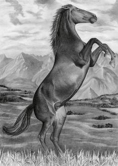 """""""Vzpínající se kůň"""", soutěžní kresba tužkou na A4"""