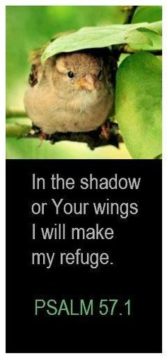 In the shadow of your wings, I will make my refuge. Ps. 57:1 www.instapray.com
