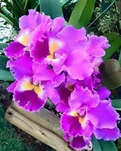 pictures of exotic flowers and butterflies Rare Flowers, Exotic Flowers, Tropical Flowers, Amazing Flowers, Beautiful Flowers, Cattleya Orchid, Anemone Flower, Types Of Orchids, Orchid Plants