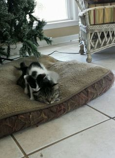 Cat Goes Outside To Play — And Comes Home With A Kitten