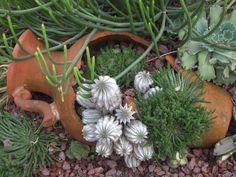 Broken pot succulent planting via Sweetstuff's Sassy Succulents (FB)
