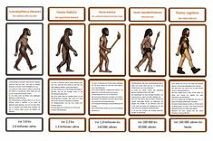 krabbelwiese (im Ruhemodus): Entwicklung des Homo sapiens Autism Education, Science Education, Primary School, Elementary Schools, Biology Classroom, Subject And Predicate, Early Humans, Human Evolution, Prehistory