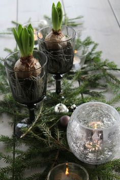 Table setting, hyacint