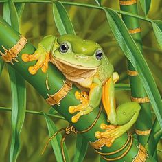 The Magnificent Tree Frog, Australia's largest frog, is brought to life in this stunning painting by Aboriginal artist Ego Guiotto.