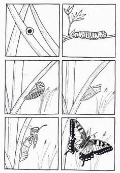 6 images séquentielles de la chenille au papillon