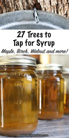 27 Trees To Tap For Syrup Maple trees are best known for their tasty syrup, but there are dozens of tree species that you can tap for syrup. Even if you don't have maple trees in your backyard, you can likely still make homemade syrup from backyard trees. Backyard Trees, Homemade Syrup, Edible Wild Plants, Wild Edibles, Survival Food, Homestead Survival, Survival Tips, Survival Skills, Medicinal Plants