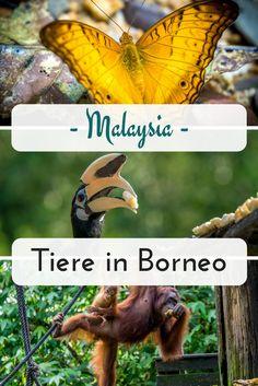 Ich zeige dir die schönsten Ecken für Wildlife in Borneo. Nationalparks in Sarawak und Sabah, sowie im Regendwald von Malaysia.