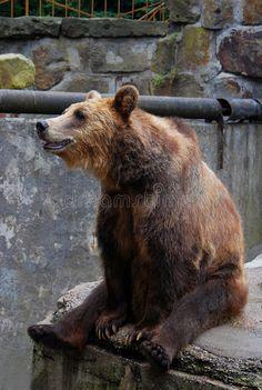 Big Brown Bear Sitting On The Edge Stock Image - Image: 28207631
