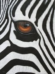 beautymothernature: Beautiful Zebra Eye Love Moments