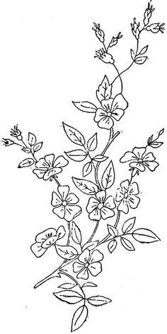 1886 Ingalls Wild Rose (2) by jeninemd, via Flickr